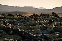 Evening glow on moss and lava by Leirdalshöfði south of Helgafell. Kvöldstemning við Leirdalshöfða, sunnan við Helgafell.