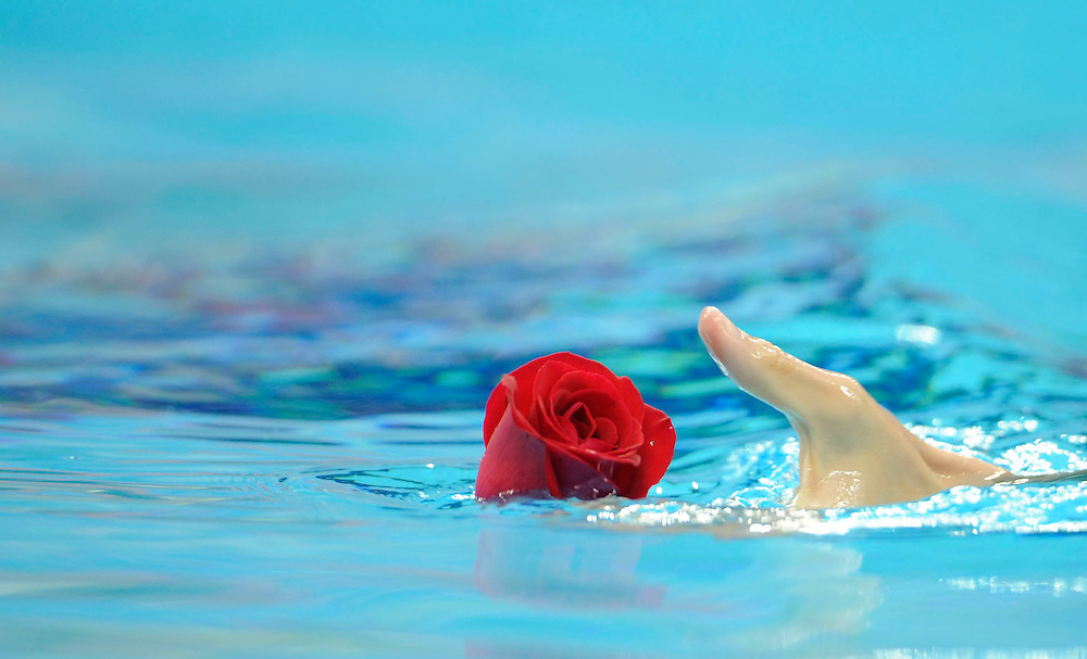 2008 OLYMPIC GAMES  - 081708 - A lone rose, left floating in the pool at the Water Cube following Michael Phelps' record-setting eighth gold medal is gently removed by an Italian synchronized swimmer who entered the water for practice following the swimming events at the Olympic Games in Beijing, China.
