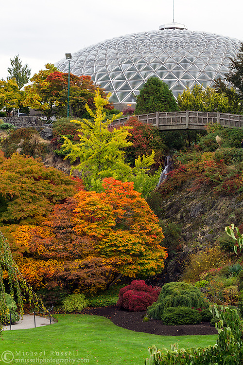 Fall Maples and the Bloedel Conservatory at Queen Elizabeth Park in Vancouver, British Columbia, Canada