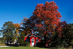 Red house with red tree, upstate New York, near Burlington, New York, United States of America
