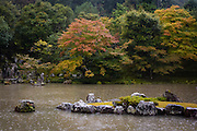 At the temple of Tenryuji, in Arashiyama, on the outskirts of Kyoto, rain falls on the pond in the temple's garden.