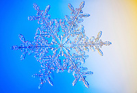 Snowflake photographed through microscope
