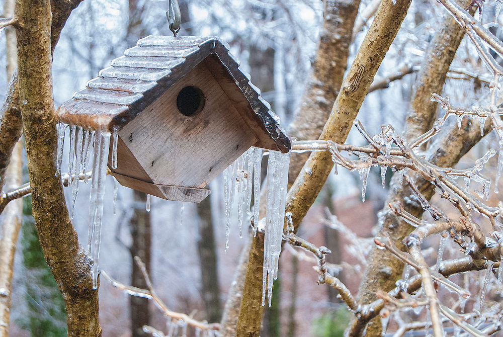 Birdhouse Covered in Winter Ice
