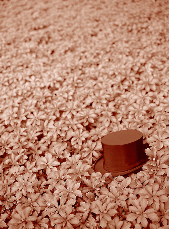Tophat in leaves, Naumkeg, red sepia tone<br />
