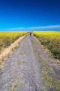 Hiking through wild mustard, Santa Cruz Island, Channel Islands National Park, California USA