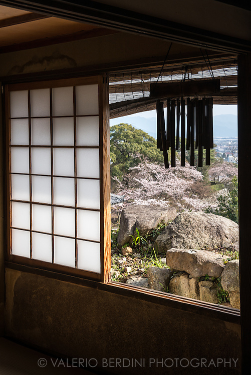 A traditional Japanese tea house with a window facing a park full of blossoming cherry trees.