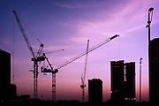 Cranes at Dusk - Doha, Qatar