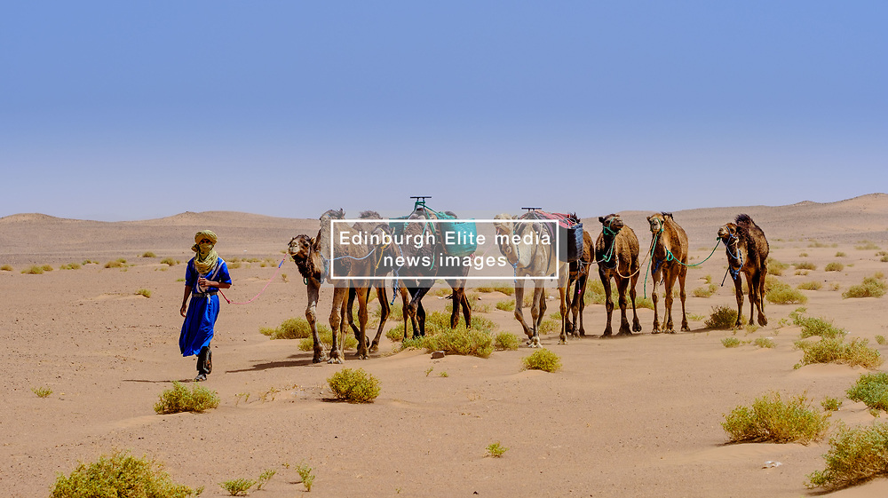 A Berber man in traditional dress leading a camel train in the Moroccan Sahara Desert<br /> <br /> (c) Andrew Wilson   Edinburgh Elite media
