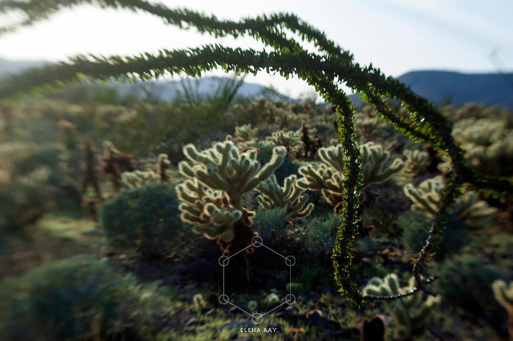 Cactus in the desert.