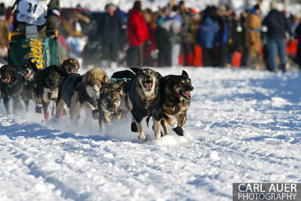 3/4/2007:  Willow, Alaska -  The dog team of 4 time Iditarod Champion and 2006 winner Veteran Jeff King of Denali, AK heads out for Nome in what he hopes will be his 5th win at the 35th Iditarod Sled Dog Race