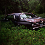 August, 2009 - Mt. Desert Island, Maine : A rusted out car sits in a patch of low-brush blueberry bushes on Mount Desert Island in Maine.