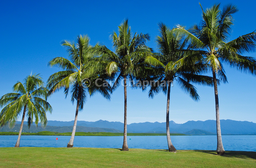 Palm trees, blue sky and the mountains in Port Douglas, Queensland, Australia.