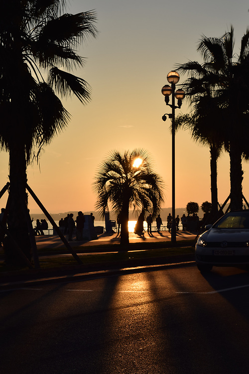 Sunset through a palm tree on Promenade Des Anglais