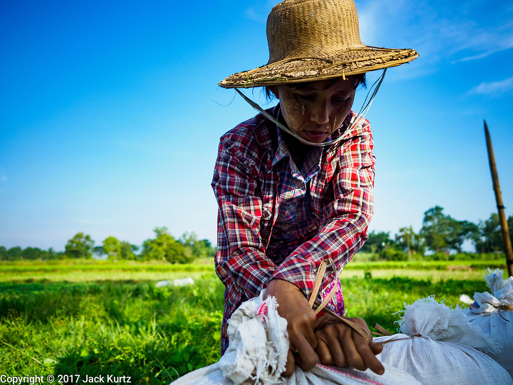 "21 NOVEMBER 2017 - MAUBIN, AYEYARWADY REGION, MYANMAR: A worker ties a sack of rice shut after it was threshed in the Ayeyarwady  Delta. Myanmar is the world's sixth largest rice producer and more than half of Myanmar's arable land is used for rice cultivation. The Ayeyarwady Delta is the most important rice growing region and is sometimes called ""Myanmar's Granary."" The UN Food and Agriculture Organization (FAO) is predicting that the 2017 harvest will increase over 2016 and that exports will surge to 1.8 million tonnes.   PHOTO BY JACK KURTZ"