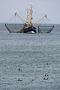 Sylt, Germany. Hörnum. Fish trawler and seabirds.