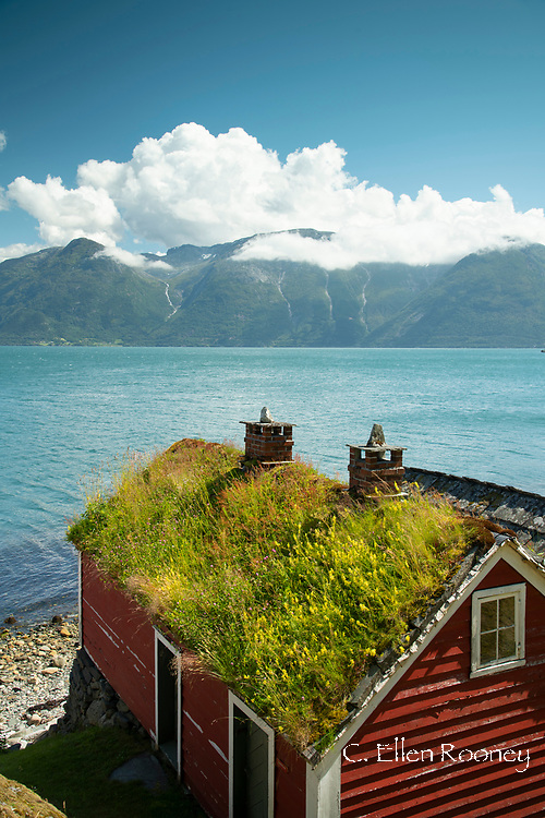 A sod roof on an old building in the Hardanger Folk Museum on Hardanger Fjord in Utne, Norway, Europe
