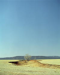 tree in a dry river bed in New Mexico