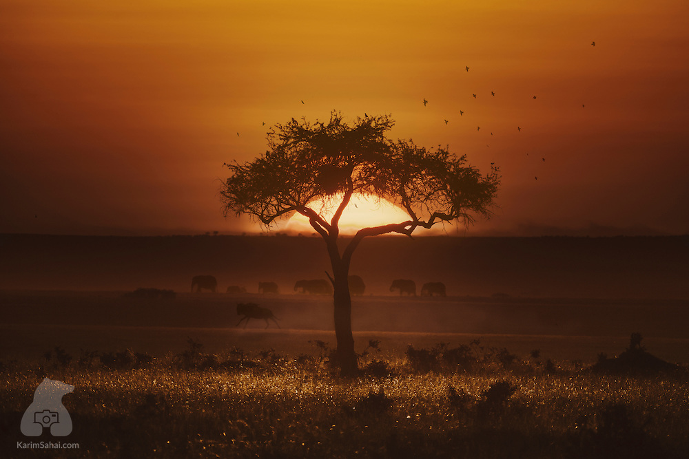 Another day in the Kenyan savanna ends with this mesmerizing gift. A herd of elephants parades in the distance, a wildebeest trains for the next Olympic Games and an acacia tree grows hair around the Sun. The magnificent wilderness and the abundance of light make Kenya's wilderness a spectacle all nature photographers must experience in their lifetime.