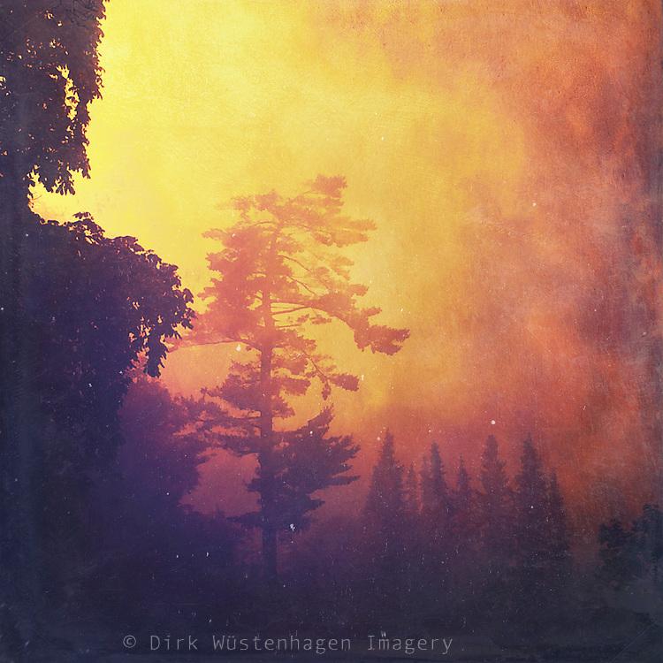 Fantastische Waldszene, Wuppertal, Deutschland<br /> <br /> Licenses: http://www.westend61.de/koala2/imgsearch.html?number=DWI000172&amp;mode=pv