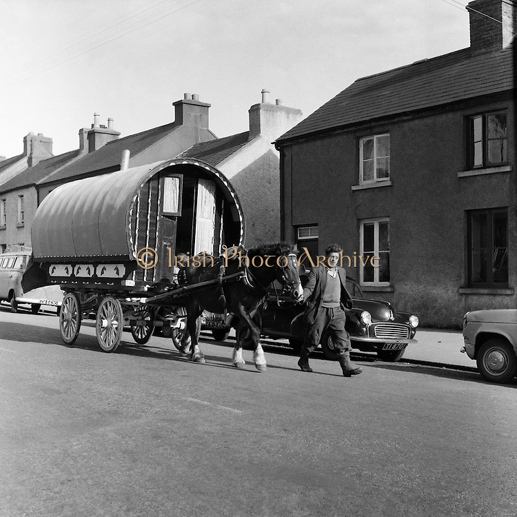 Ballinsalve Tinker King, Hous Fair.03.10.1960