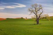 Scenic Grasslands in Palouse Washington