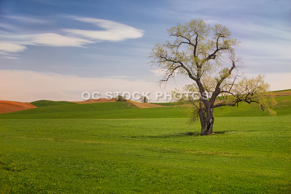 Scenic Grasslands in Palouse Washington