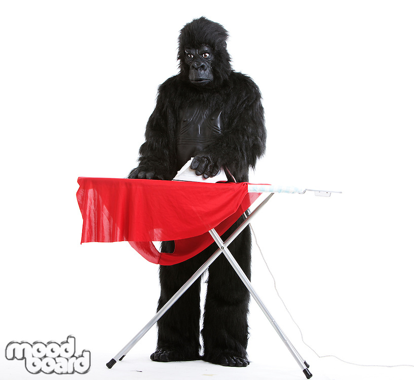 Young man in gorilla costume ironing red cloth against white background