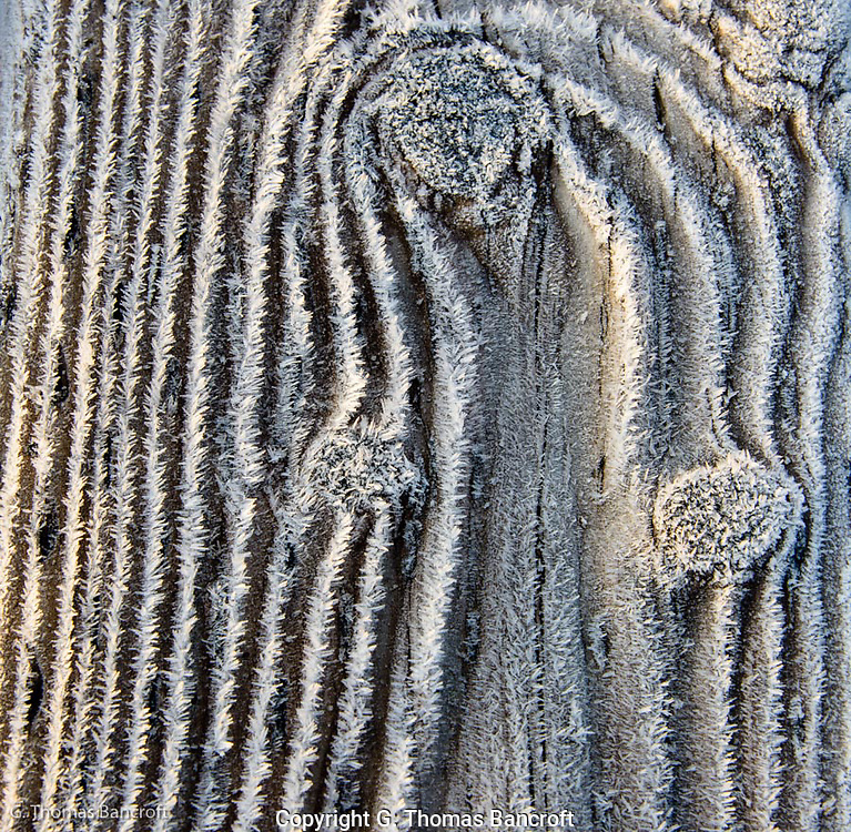 The morning fog had formed ice crystals along the grain of the planks on the dock.  I was fascinated by the design it formed and how the early morning light made the crystals glow.  I looked for an appealing design.