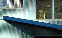Roofline, Island Studio, Granville Island, Vancouver BC