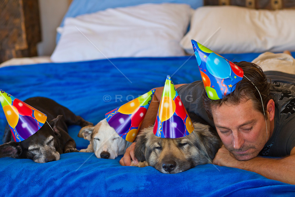 dogs and man in party hats sleeping on a bed