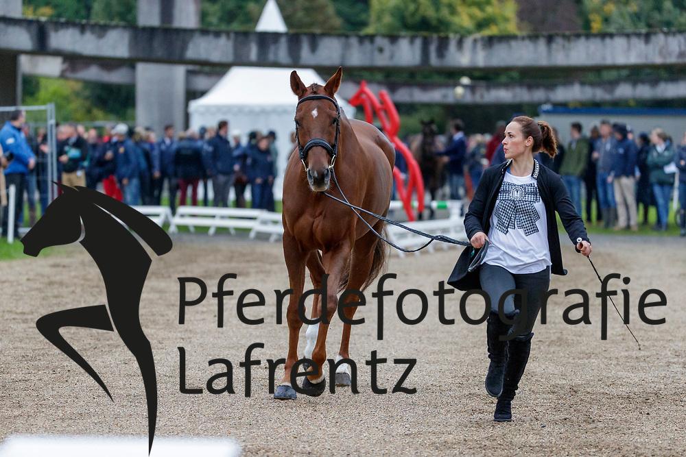 SCHNAUFER Josephine (GER), VIKTOR 107<br /> Le Lion d'Angers - FEI Eventing World Breeding Championship 2019<br /> 2. Verfassungsprüfung<br /> 20. Oktober 2019<br /> © www.sportfotos-lafrentz.de/Stefan Lafrentz