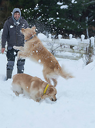 Fado and Luca frolic in the snow with their owner Erol Yanar near Springfield, inland Canterbury, New Zealand, Thursday, July 13, 2017. Credit:  SNPA / David Alexander -NO ARCHIVING-
