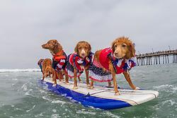 July 29, 2017 - Imperial Beach, CA, US - Surfdog returns to Imperial Beach for the twelfth  year...Terri, Kai, Jessie, and Fire, surfing. (Credit Image: © Daren Fentiman via ZUMA Wire)