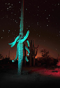 Ironwood Forest National Monument at night near Marana, Arizona, USA, in the Sonoran Desert.