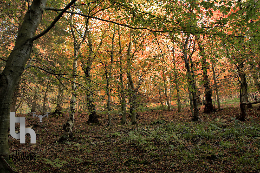 Humbie Woods Autumn 31-10-09