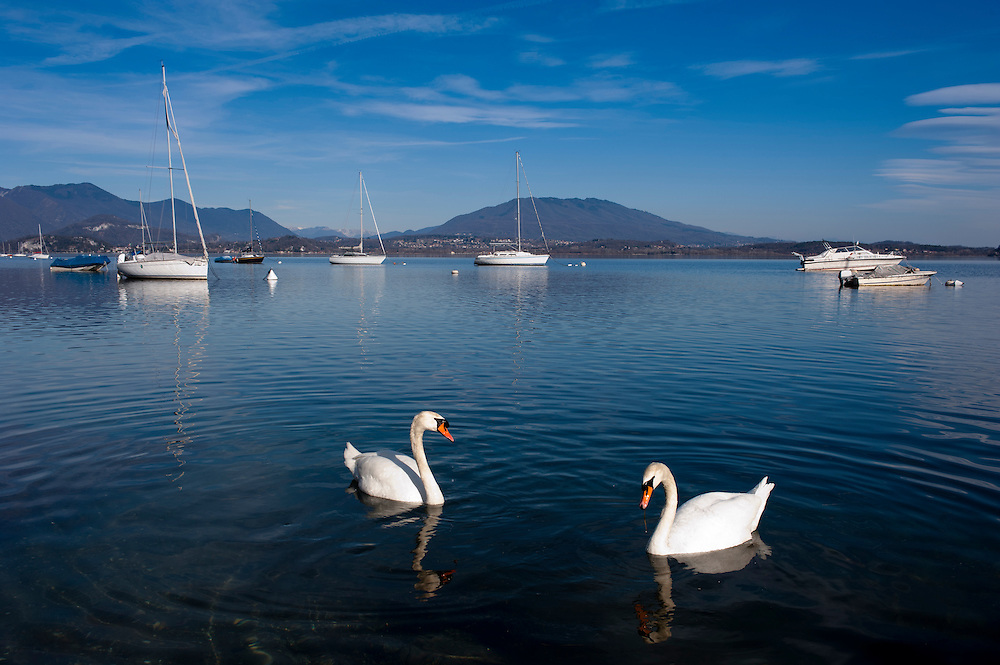Two swans and boats in Lake Maggiore, Italy