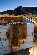 Discarded deer hide fur skins in garbage dumpster, near Kanab, Kane County, Utah
