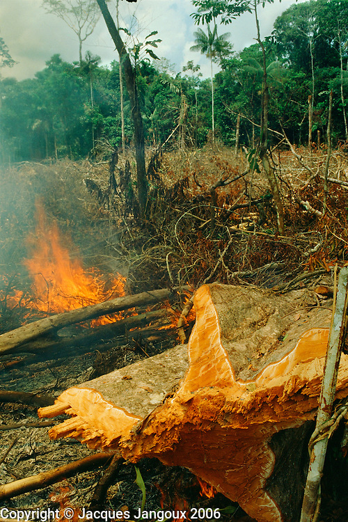 Slash-and-burn agriculture: forest being burned for cultivation in Amazon region, Acre, Brazil