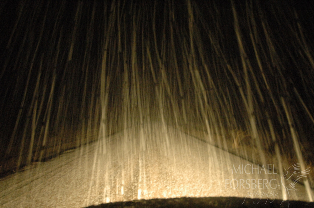 Blizzard photographed from vehicle on county road north of Oshkosh in the Nebraska Sandhills.