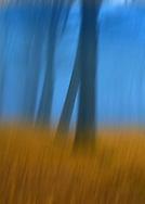Abstract of Felbrigg Woods in winter, Norfolk, UK
