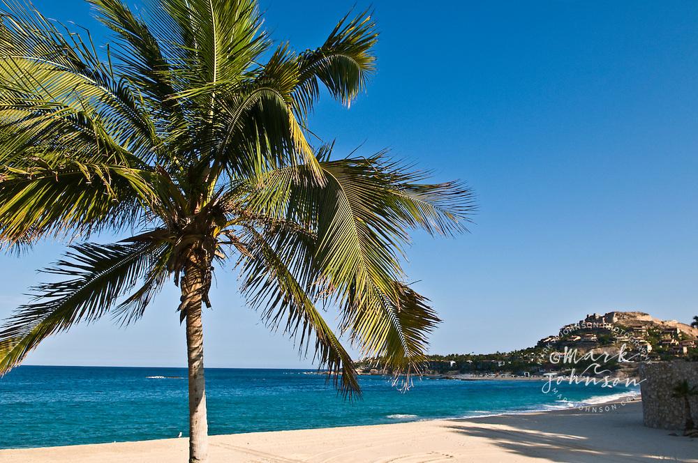 Palm tree & Palmilla Beach, San Jose del Cabo, Baja California Sur, Mexico