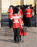 The Irish Guard's Mascot Conmael, a two year old Irish wolfhound led the parade.