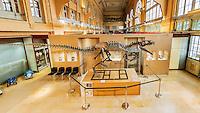 Vente aux encheres exceptionnelle. <br /> Le 10 decembre, a Lyon, vous pourrez acheter un dinosaure. Il s'agit d'un Allosaurus, anc&ecirc;tre du c&eacute;l&egrave;bre T-Rex. <br /> Il date d environ 150 millions d annees et a ete decouvert dans le Wyoming aux Etats-Unis par un groupe de paleontologues americains qui ont mis deux ans a l'exhumer et a le monter.Estimation : un million d'euros.Il est tres rare que des dinosaures soient ainsi vendus aux encheres.Avec ses 6 m&egrave;tres de long et 2,50 m de haut, ce carnivore, chef de file des grands predateurs du Jurassique, vivait principalement en Amerique du Nord, il y a 153 a 136 millions d'annees.Il n'y a presque aucun veritable Allosaurus dans les musees fran&ccedil;ais, en dehors de celui du Museum d'histoire naturelle de Paris, la plupart etant represente par des moulages &laquo;&nbsp;C&rsquo;est tellement rarissime, s&rsquo;extasie Claude Aguttes, commissaire-priseur. C&rsquo;est l&rsquo;objet le plus curieux et le plus insolite que j&rsquo;ai eu a vendre&rdquo; Prenomme Kan (ce qui signifie &laquo; chef &raquo; en langue mongole), l'Allosaurus expose a Lyon a l&rsquo;hotel des ventes Aguttes est dans un etat de conservation remarquable, complet a 75 %  et possedant un crane parmi les mieux conserves du monde.Sa tete est complete &agrave; 98 %, avec ses dents d'origine, toutes accrochees &agrave; la machoire, ce qui est rarissime. Il n&rsquo;y en a que 5 dans le monde. Une mine pour les scientifiques qui y voient l'occasion de faire progresser la connaissance.L&rsquo;une des grandes conditions: que le squelette ait ses papiers en regle avec l'UNESCO,  l'achat de dinosaures etant un business tres lucratif.