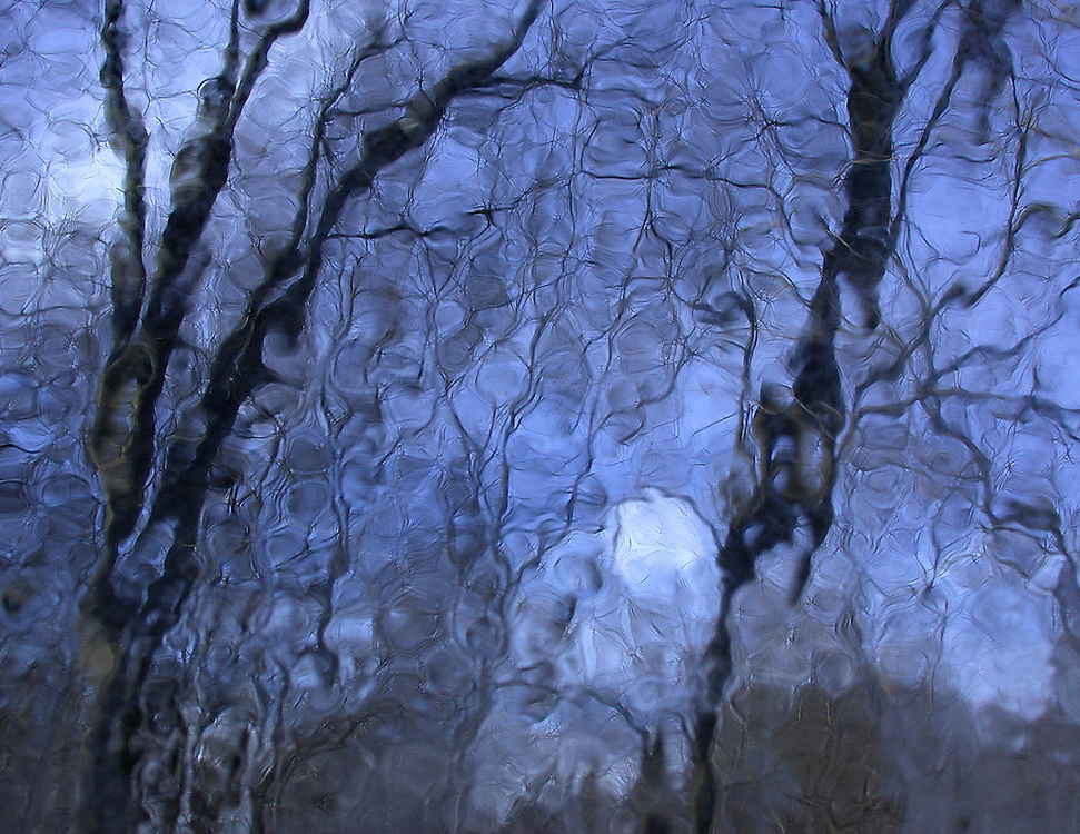 View of Trees through Ice Covered Window