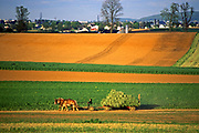 Farm land expanse, Amish, hay harvest, Lancaster Co., PA
