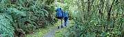 Tramping through the Milford Track, Fiordland