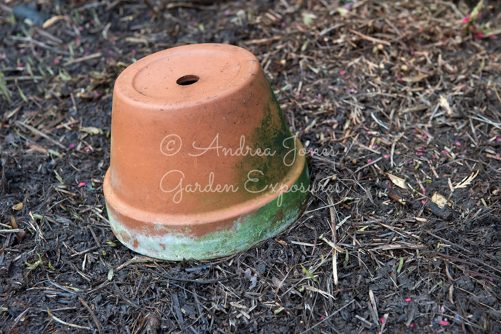 Terracotta pot upturned to protect plants during winter