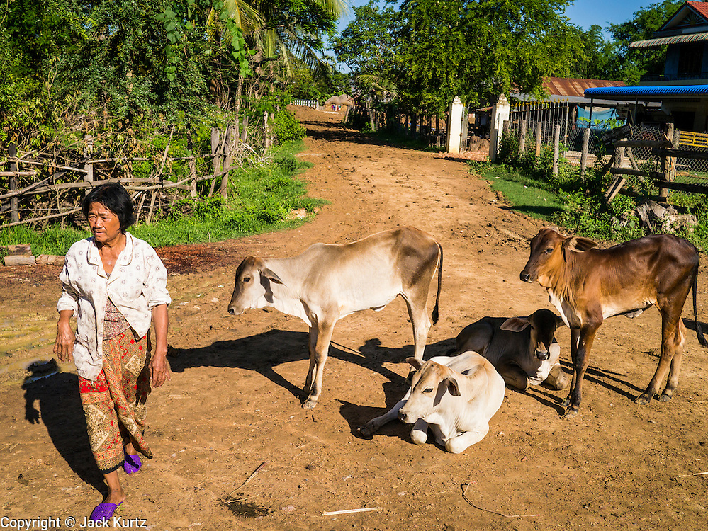 29 JUNE 2013 - BATTAMBANG, CAMBODIA:  A woman walks past cows on the side of the bamboo train tracks near Battambang. The bamboo train, called a norry (nori) in Khmer is a 3m-long wood frame, covered lengthwise with slats made of ultra-light bamboo, that rests on two barbell-like bogies, the aft one connected by fan belts to a 6HP gasoline engine. The train runs on tracks originally laid by the French when Cambodia was a French colony. Years of war and neglect have made the tracks unsafe for regular trains.  Cambodians put 10 or 15 people on each one or up to three tonnes of rice and supplies. They cruise at about 15km/h. The Bamboo Train is very popular with tourists and now most of the trains around Battambang will only take tourists, who will pay a lot more than Cambodians can, to ride the train.       PHOTO BY JACK KURTZ