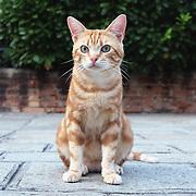 Venice  Cats