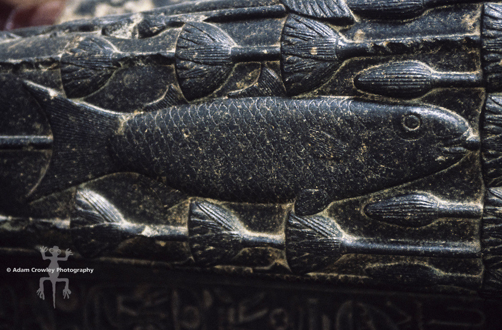 Close up of stone carving of fish, Cairo Museum